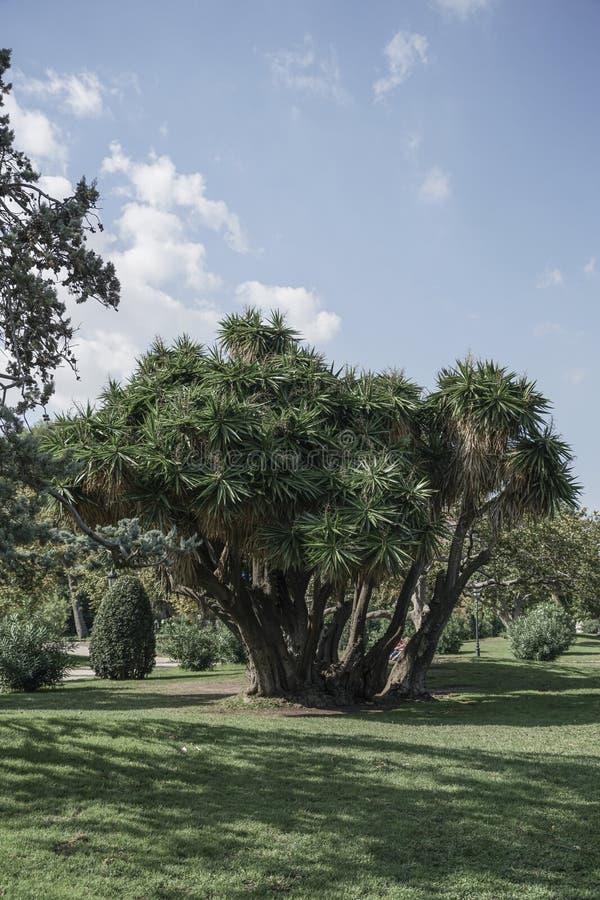 Drzewko palmowe przy parkiem w lecie fotografia royalty free