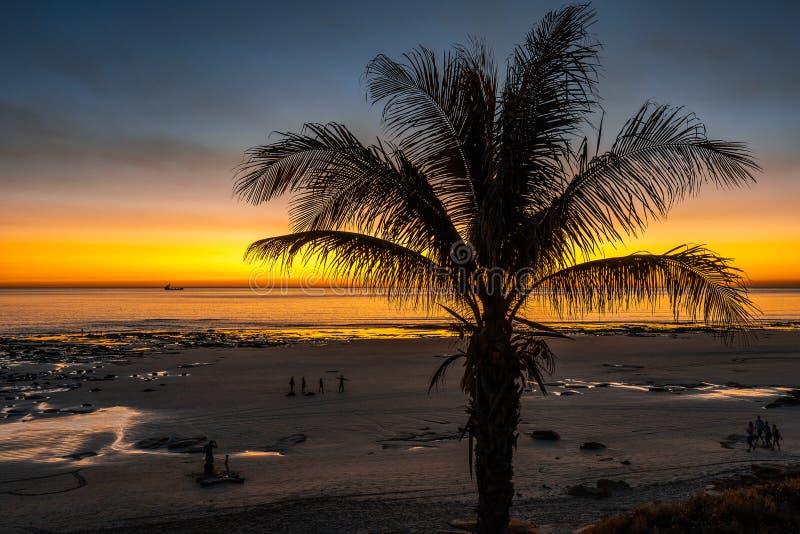 Drzewko palmowe przy zmierzchem przy Kablową plażą w Broome, zachodnia australia zdjęcie stock