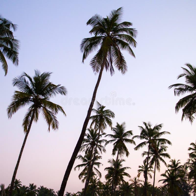 Drzewko palmowe sylwetka przy zmierzchem zdjęcia royalty free