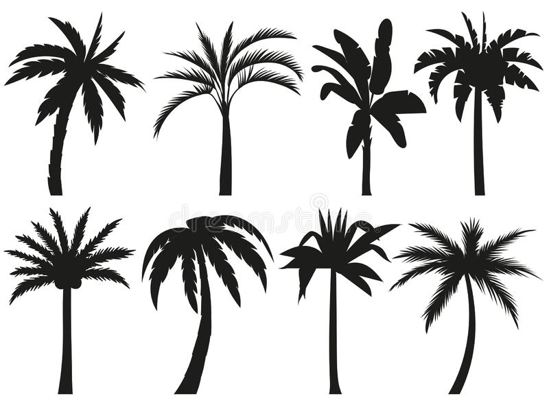 Drzewko Palmowe sylwetki Tropikalni liście, retro palmy drzewo i rocznik sylwetek ilustracji wektorowy set, ilustracji