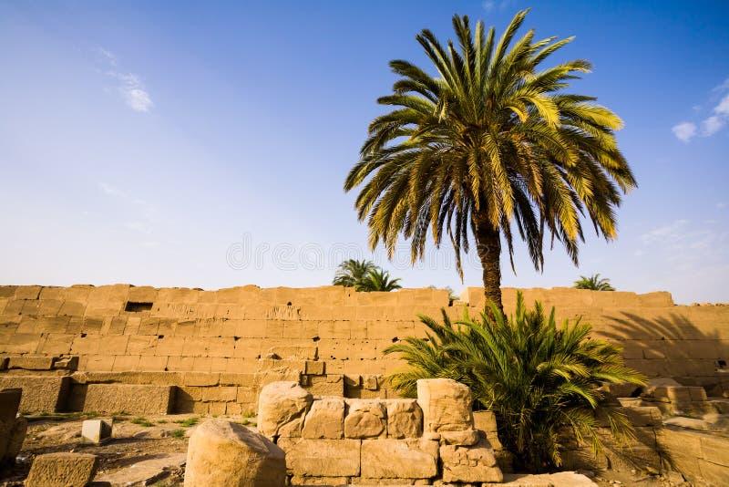 Drzewko palmowe wśrodku Karnak świątyni zdjęcia stock