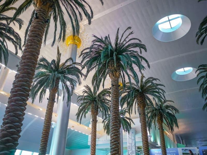 Drzewko palmowe w Dubai lotnisku międzynarodowym ogromnym obraz royalty free