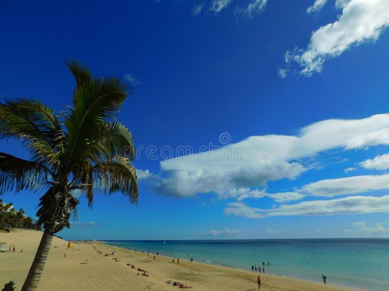 Drzewko palmowe w Morro Jable plaży, Fuerteventura zdjęcie royalty free
