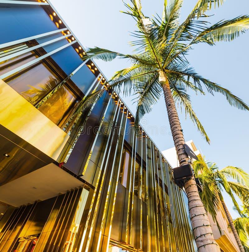Drzewko palmowe w rodeo przejażdżce fotografia royalty free