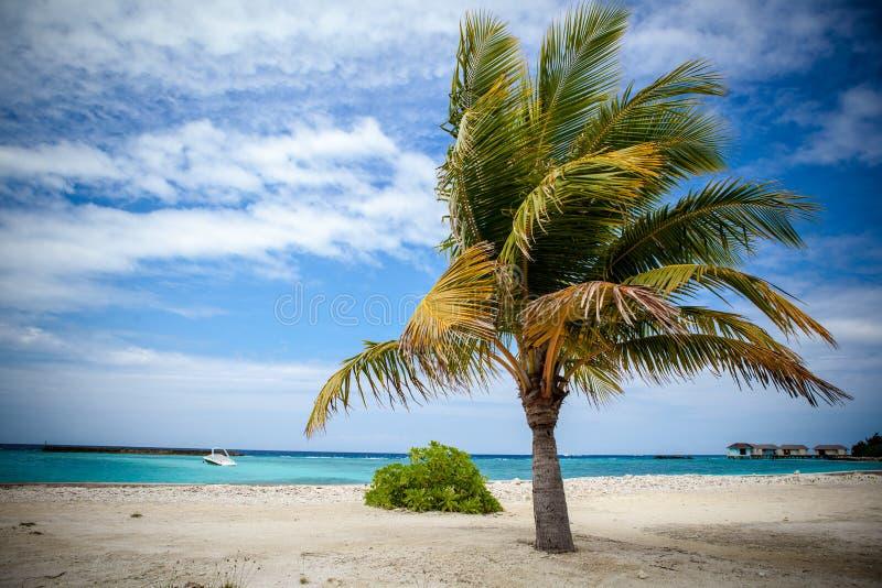 Drzewko palmowe w schronieniu zdjęcie royalty free