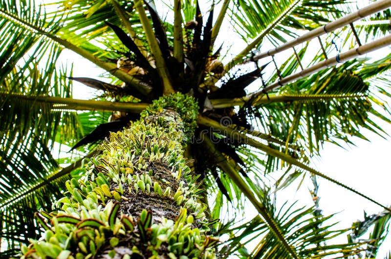 Drzewko palmowe widok fotografia stock