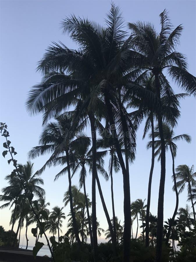 Drzewko palmowe wschód słońca fotografia royalty free