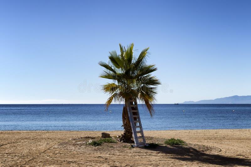 Drzewko palmowe z krok drabiną zdjęcie stock