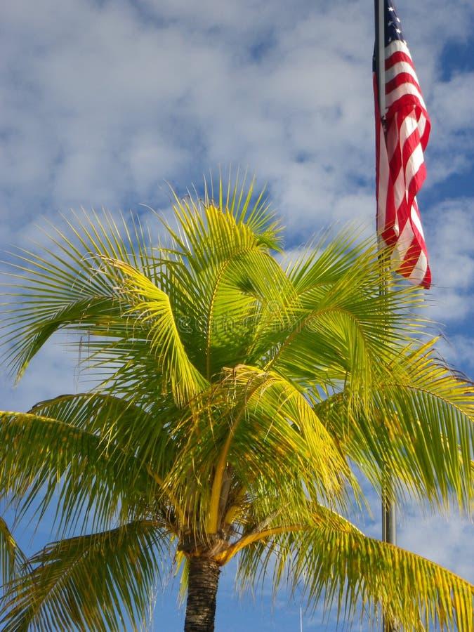 Drzewko palmowe z niebieskiego nieba tłem i flaga amerykańską fotografia stock
