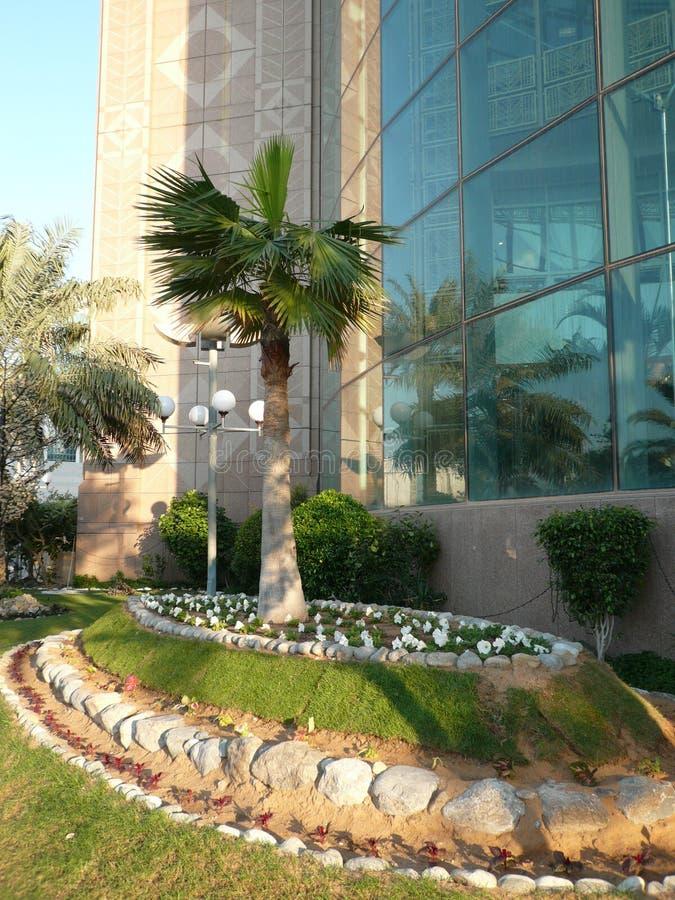 Download Drzewko Palmowe Z Specjalną Uwagą Zdjęcie Stock - Obraz złożonej z magistrala, kopuła: 57665948