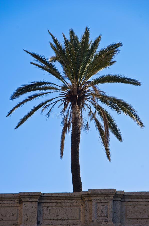 Drzewko palmowe za ścianą blisko Cagliari schronienia, Sardinia obrazy stock
