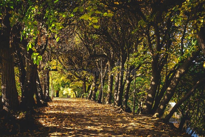 Drzewna ścieżka w lesie w spadku fotografia royalty free