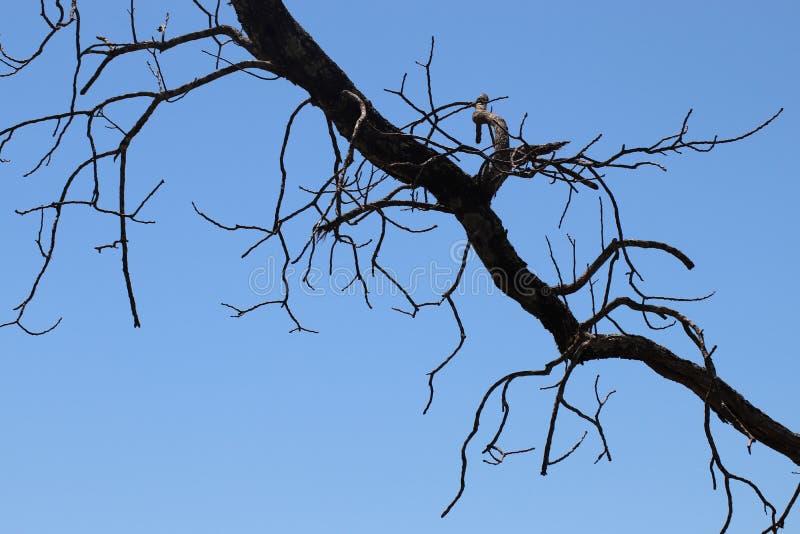 Drzewna błyskawica zdjęcia royalty free
