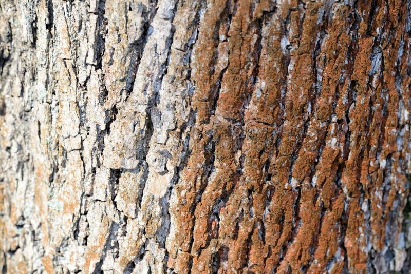 Drzewna barkentyna iluminująca słońce tekstury tłem fotografia royalty free