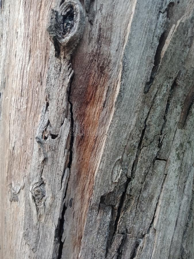 Drzewna barkentyna textured tło, natury krajobrazowa tapeta zdjęcie stock