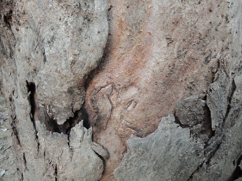 Drzewna barkentyna textured tło, natury krajobrazowa tapeta zdjęcia stock