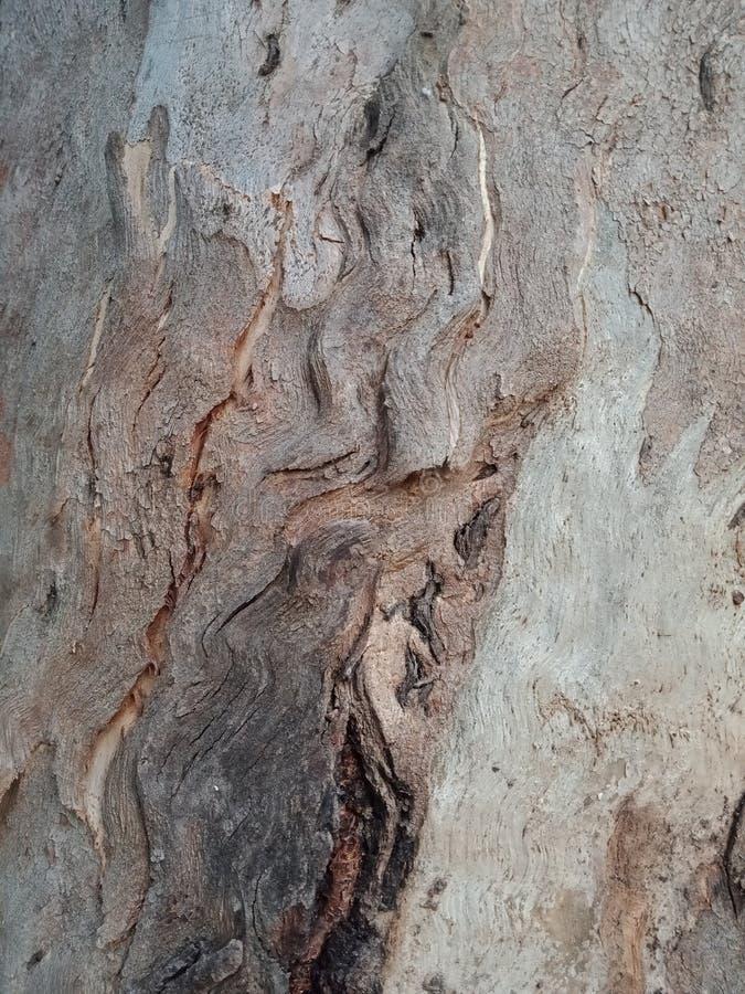 Drzewna barkentyna textured tło, natury krajobrazowa tapeta obrazy royalty free