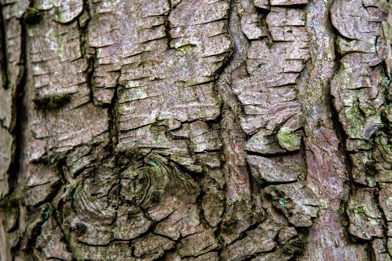 Drzewna barkentyna w drewnach zdjęcie royalty free
