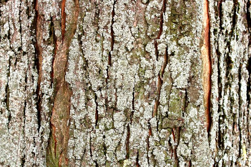 Drzewna barkentyna w górę mech zdjęcia stock