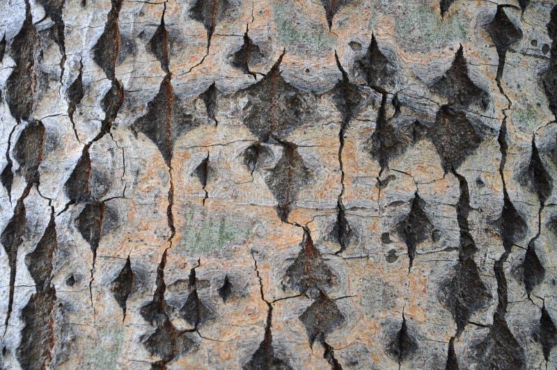 Drzewna barkentyna z pięknymi teksturami zdjęcia royalty free