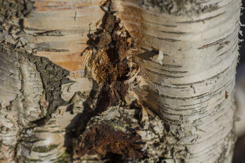Drzewna barkentyna zaświecająca jaskrawym słońcem fotografia royalty free