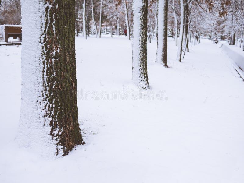 Drzewna barkentyna zamknięta w górę śniegu w fotografia royalty free