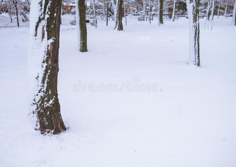 Drzewna barkentyna zamknięta w górę śniegu w obrazy royalty free