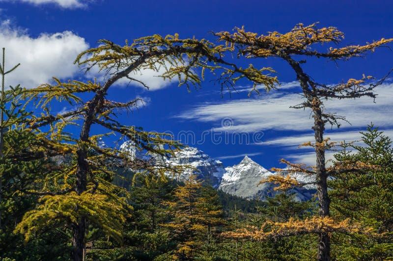 Drzewna brama przy chabeta smoka śniegu górą zdjęcie royalty free