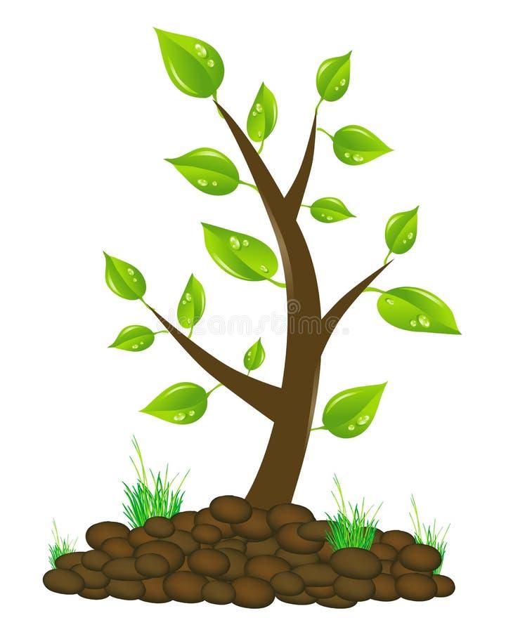 Drzewna ilustracja ilustracji