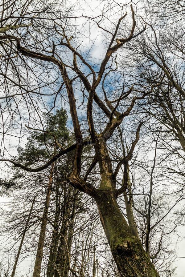 Drzewna korona obrazy royalty free
