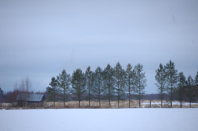 Drzewna linia obraz stock