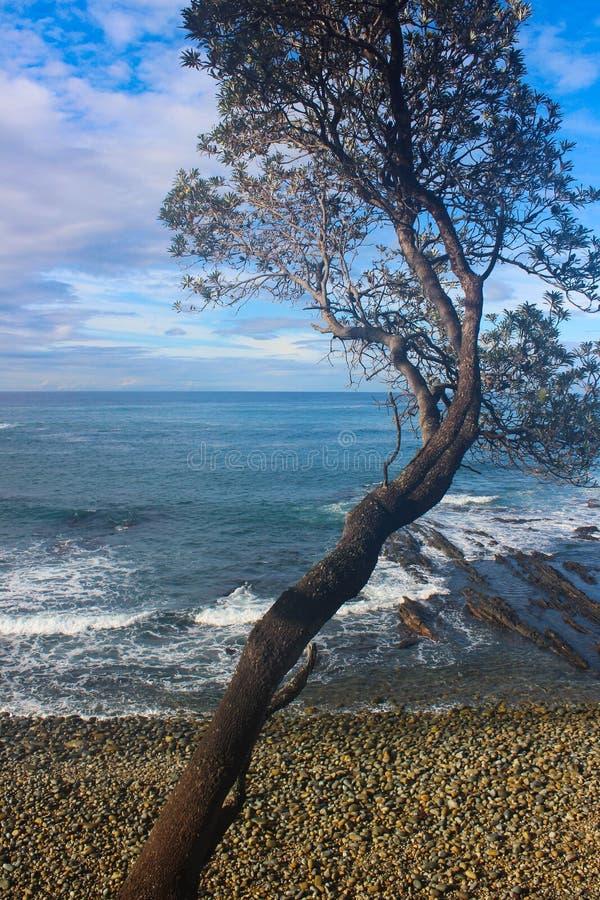 Drzewna morza i nieba plaża zdjęcia stock