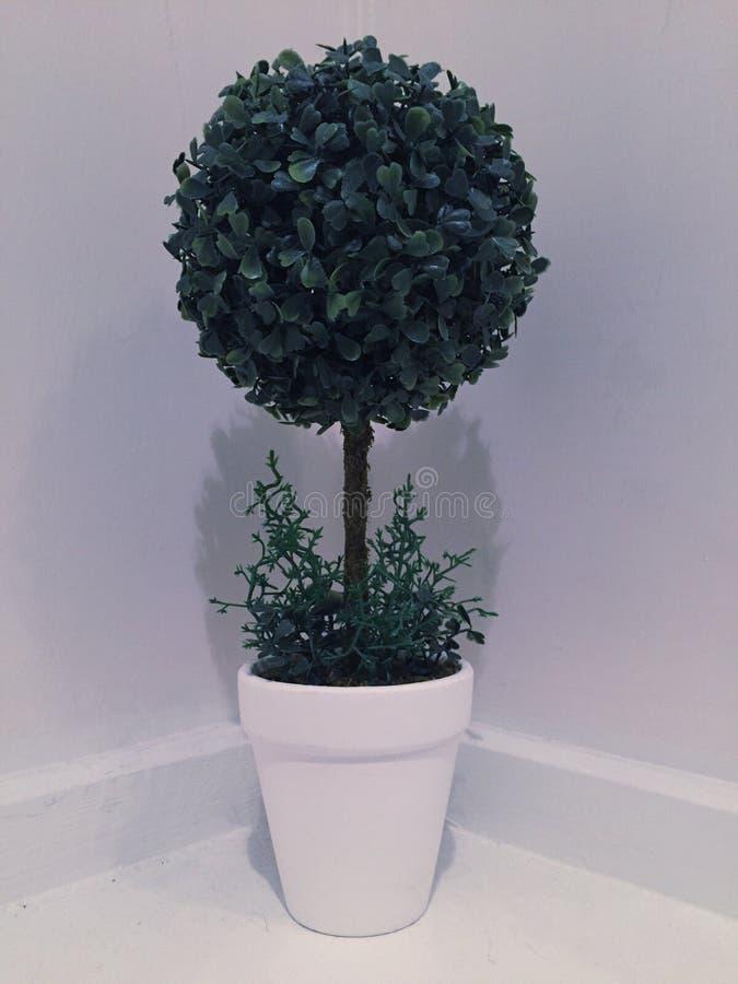 Drzewna roślina zdjęcia royalty free