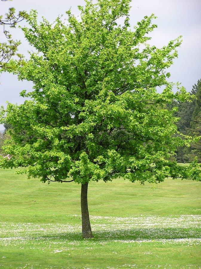 Drzewna Scena zdjęcia royalty free