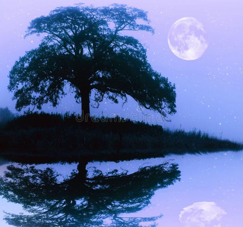 Drzewna sylwetka i księżyc w pełni zdjęcie stock