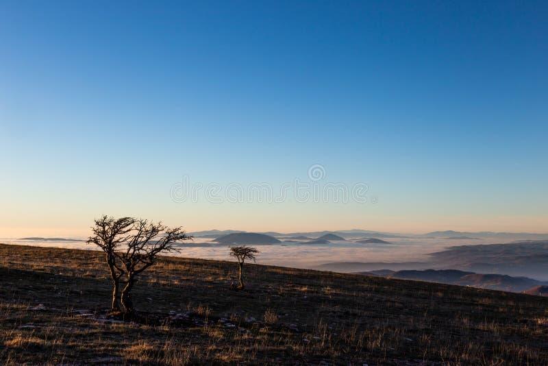 Drzewna sylwetka nad morze mgła i góry zdjęcie stock