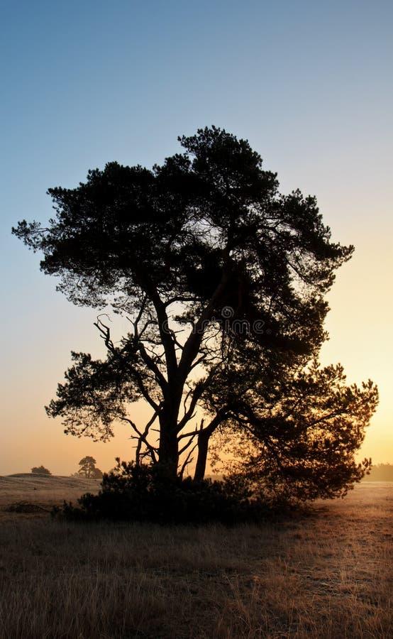 Drzewna sylwetka podczas wschodu słońca obraz royalty free