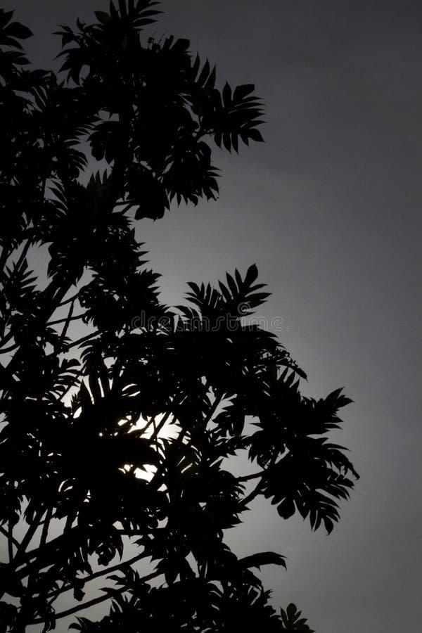 Drzewna sylwetka w monochromatycznym obrazku zdjęcie stock