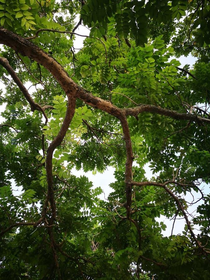 Drzewna wysokość nad ja obraz royalty free