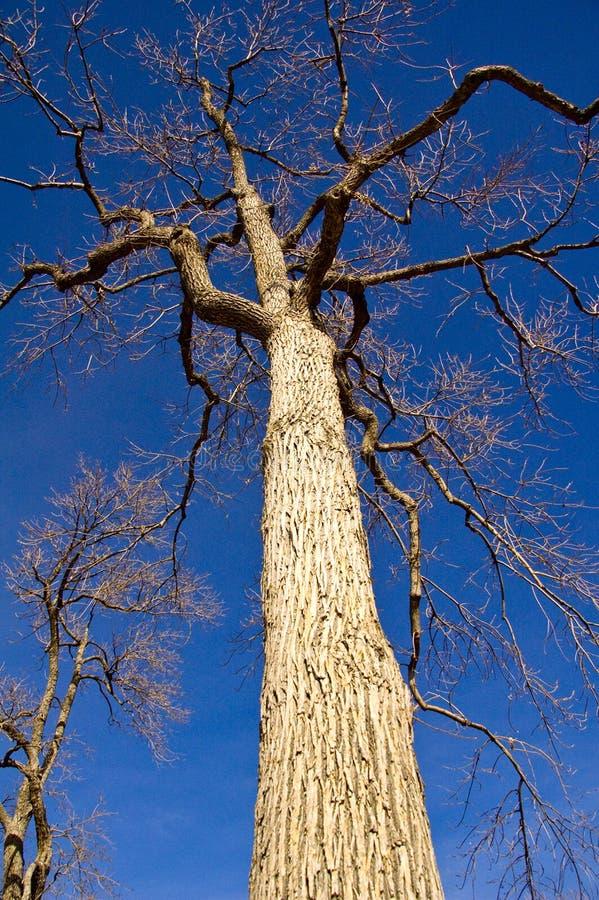 drzewna zima obraz stock