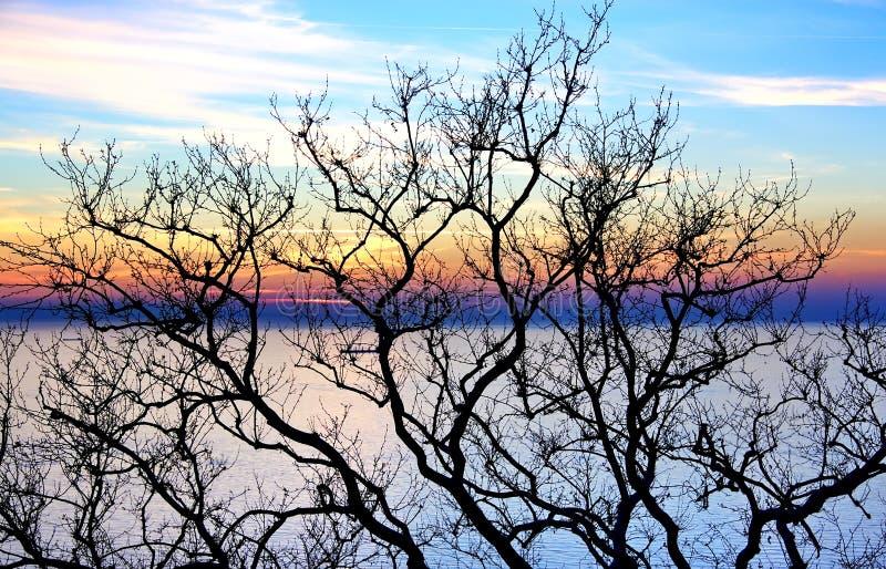 drzewne łyse gałąź zdjęcia stock
