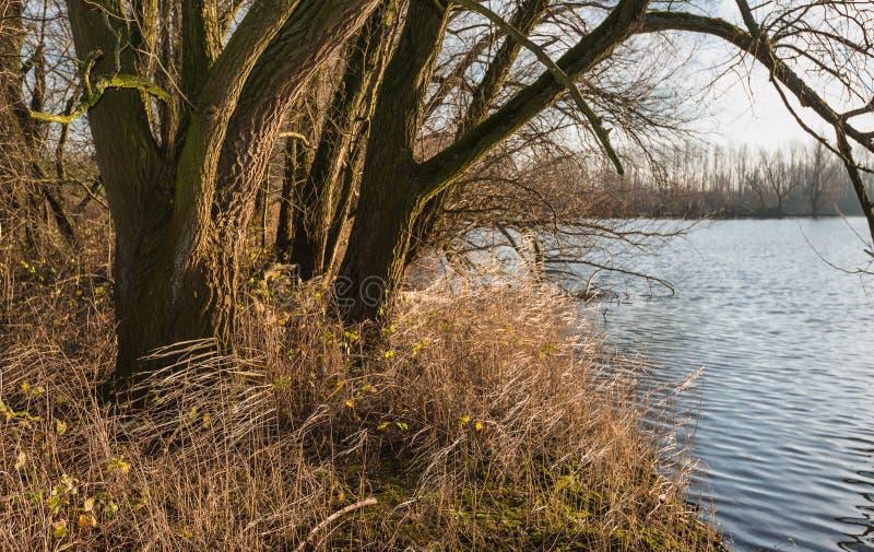Drzewne i yellowed płochy przy nabrzeżem zdjęcia stock