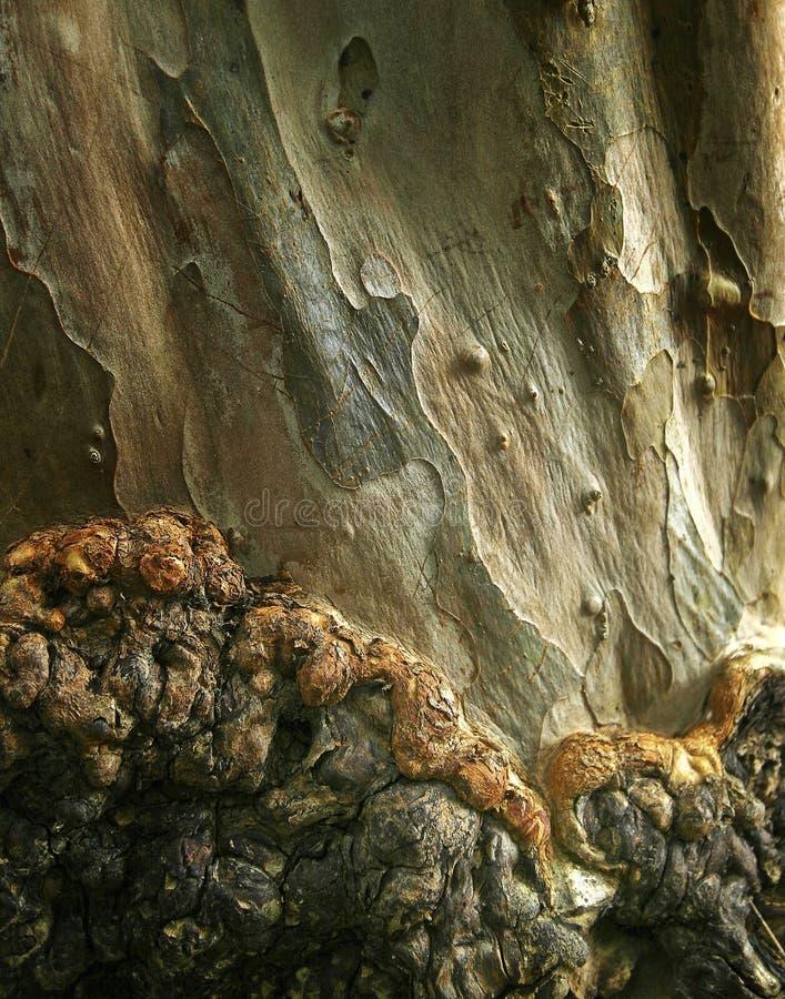 drzewne korowate tekstury zdjęcie royalty free
