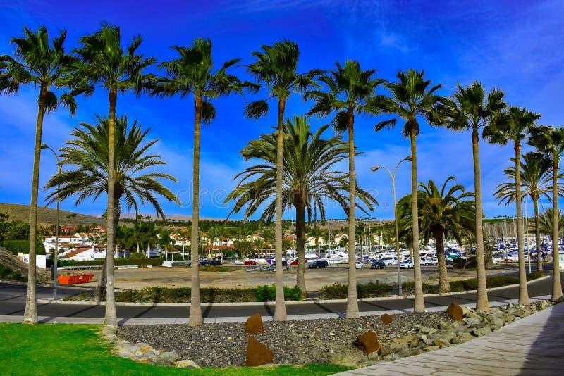 Drzewne palmy obrazy royalty free