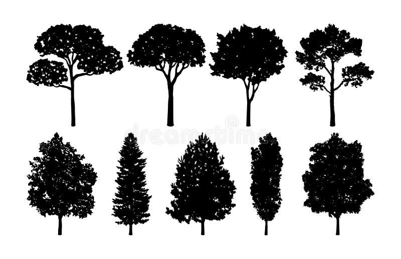 Drzewne Wektorowe kolekcje Ustawiać ilustracji