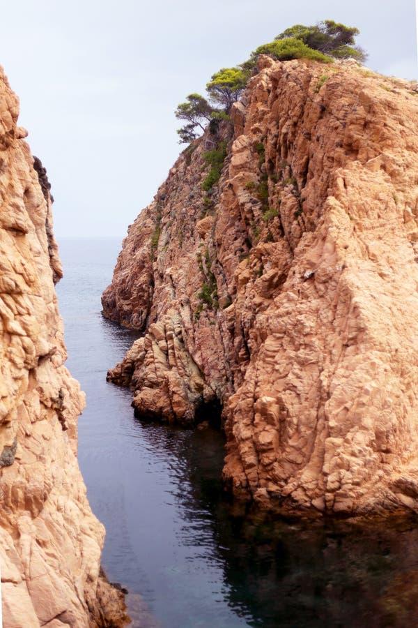 Drzewnego Śródziemnomorskiego rockowego oceanu czerwonawa natura obrazy stock