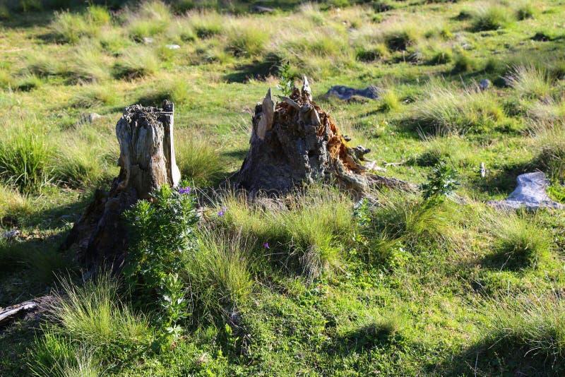 Drzewnego bagażnika gruzy fotografia stock