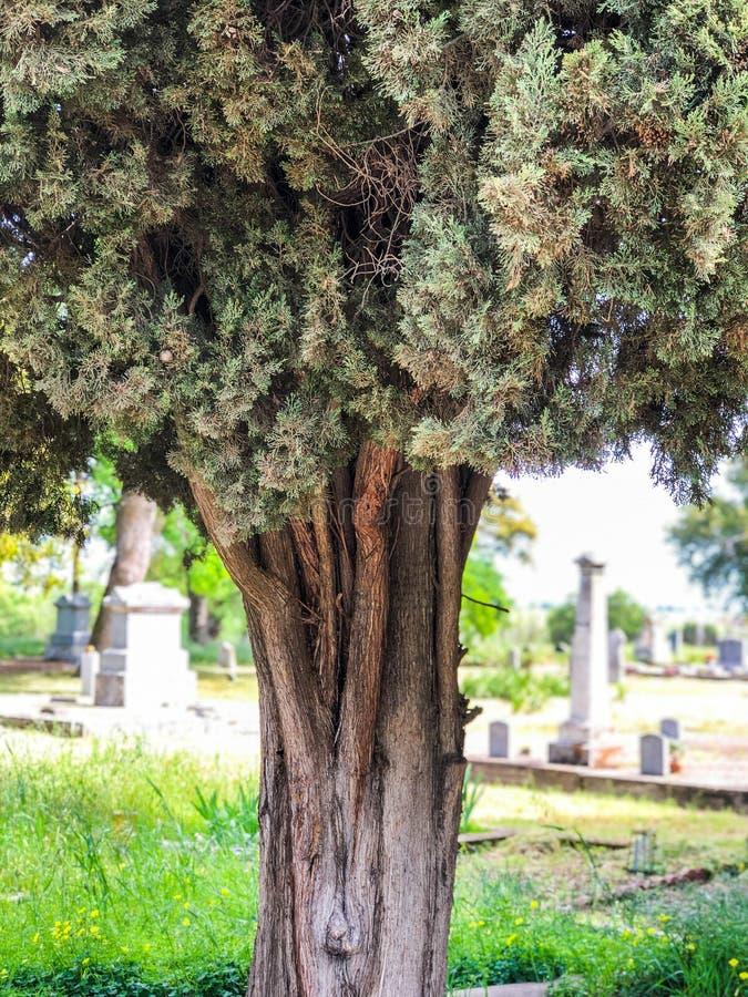 Drzewnego bagażnika i cmentarza tło fotografia stock