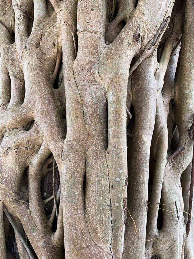 Drzewnego bagażnika natury tekstury tło zdjęcie stock