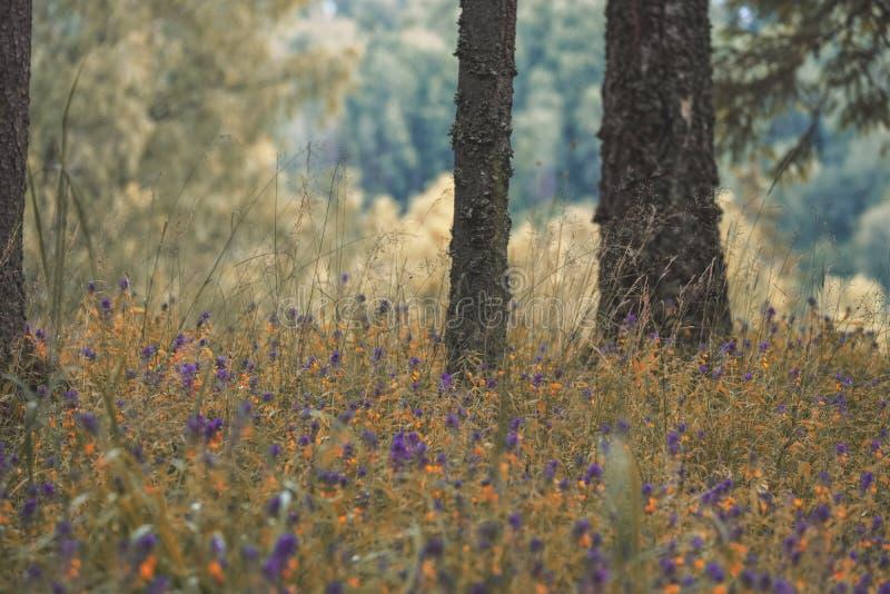 drzewnego bagażnika sylwetki w zielonym lesie - rocznika retro spojrzenie obrazy royalty free